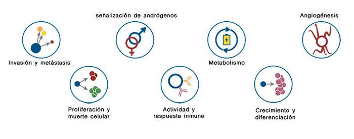 Decipher - Gencell Pharma